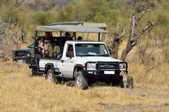 A leopard and a safari vehicle Stock Photos