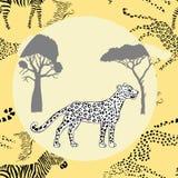 Leopard between savanna trees Stock Photo