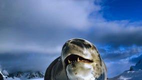Leopard seal Hydrurga leptonyx, Antarctic Peninsula stock photos
