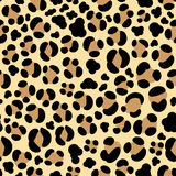 Leopard seamless background Stock Photos