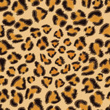 Leopard seamless pattern Royalty Free Stock Photo