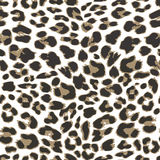 Leopard seamless pattern background,  Royalty Free Stock Photography