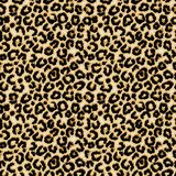 Leopard seamless pattern. African wild stock image