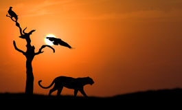 Leopard Silhouette Stock Images