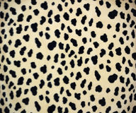 Leopard skin. A leopard skin for background Royalty Free Stock Photo
