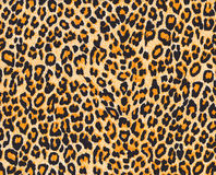 Leopard skin Stock Photos