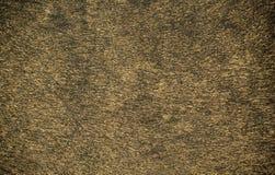 Leopard skin Stock Image