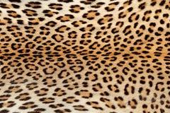 Leopard skin background Stock Image