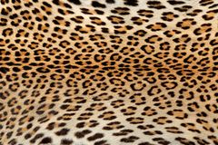 Leopard skin background Royalty Free Stock Photos