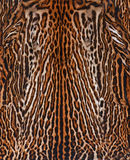 Leopard skin background. Real leopard skin texture background Stock Photos