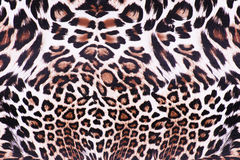 Leopard skin. Close up on leopard skin seamless background royalty free stock photo