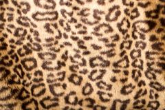 Leopard Skin. Photo of an abstract texture royalty free stock photo