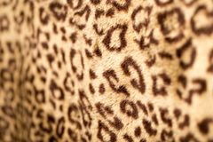 Leopard Skin. Photo of an abstract texture stock image
