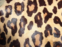 Cheetah skin royalty free stock photography