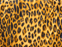 Leopard skin pattern soft blanket material Stock Photography