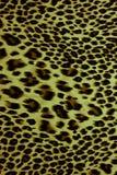 Leopard skin pattern texture Stock Photography
