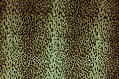 Leopard skin pattern texture Stock Image