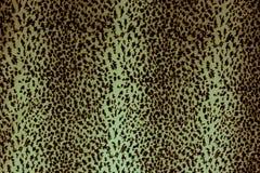 Leopard skin pattern texture Stock Image