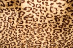 Leopard Skin. Photo of an abstract texture royalty free stock image