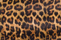 Leopard skin. Seamless background. Close up stock photo