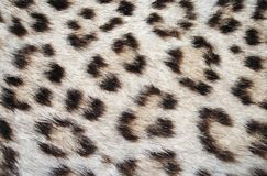 Leopard skin spots. Close up textured background vector illustration