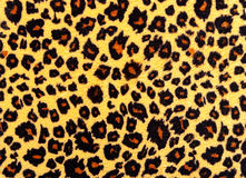 Leopard skin texture. Royalty Free Stock Image
