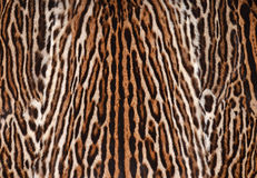 Leopard skin texture. Closeup of leopard fur coat background Royalty Free Stock Image