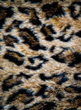 Leopard skin texture Stock Photos