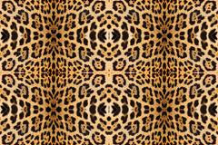 Leopard skin texture. For background royalty free stock image