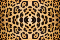 Leopard skin texture Stock Images