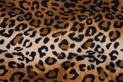 Leopard skin texture for background.  royalty free stock photos