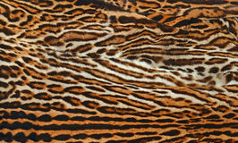 Leopard skin  texture. Background of leopard real skin  texture Stock Photography