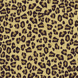 Leopard  skin texture seamless patern Stock Images
