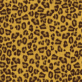 Leopard  skin texture seamless patern Royalty Free Stock Photo