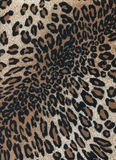 Leopard skins Stock Photography