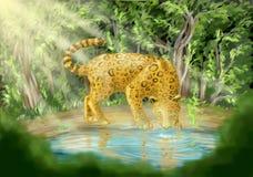 Leopard som dricker från pöl Arkivfoton