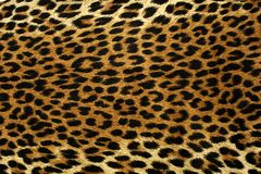 Leopard Spots. Close up spots pattern of a leopard Stock Image