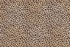 Leopard spotted fur texture. Background. Vector illustration Royalty Free Stock Images