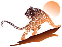 Leopard with sun Royalty Free Stock Photography
