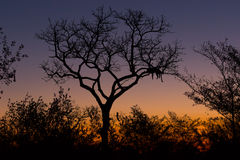 Leopard Sunset Silhouette Stock Image
