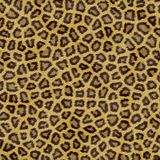 Leopard texture. Dence texture of a short sand color leopard furr vector illustration
