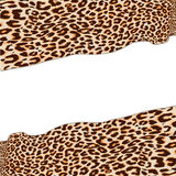 Leopard texture Royalty Free Stock Photos