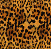 Leopard texture Royalty Free Stock Images