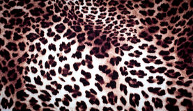 Leopard texture Stock Images