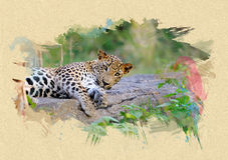 Leopard on textured paper. Brush effect. Leopard on textured paper. The effect of the paint brush Stock Photos