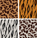 Leopard and tiger patterns Stock Photography