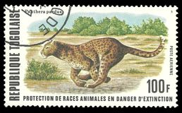 Leopard. Togo - stamp printed in1977, Fauna, Series Endangered animals, Leopard, Panthera pardus Stock Photography