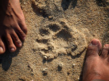 Leopard Tracks Stock Images