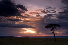 Leopard in a tree at sunset Stock Photo