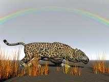 Leopard und Gras Stockfotos